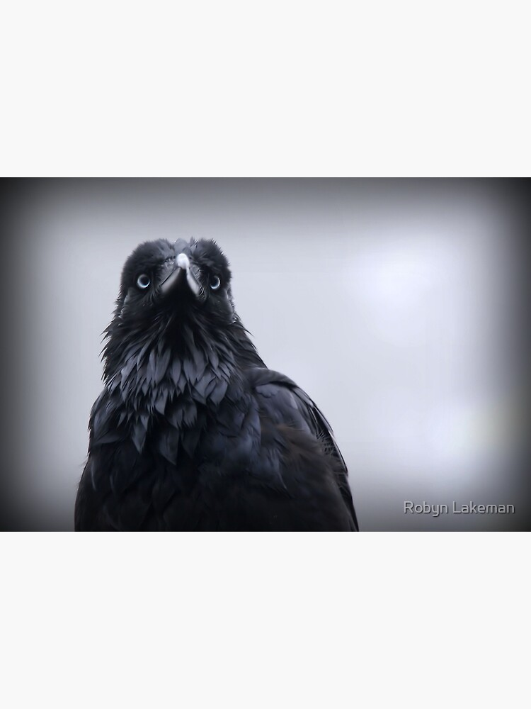 Crow protector by Rivergirl