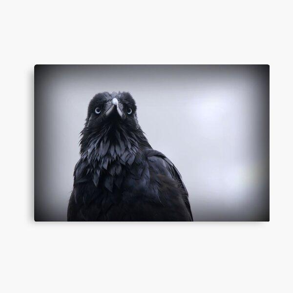 Crow protector Canvas Print