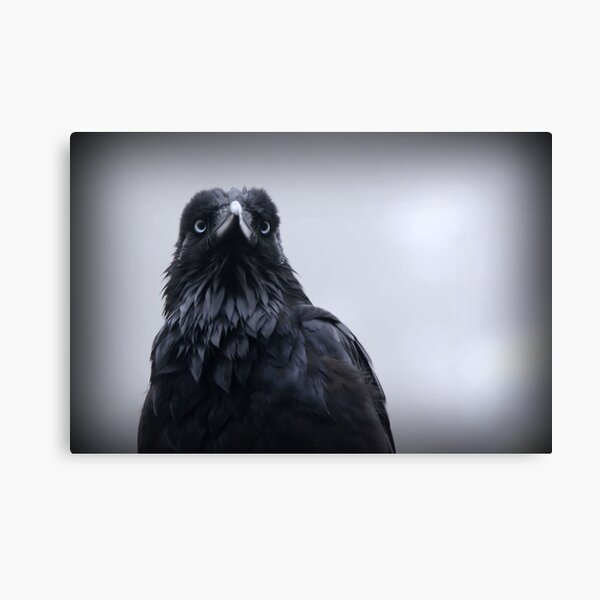 Crow protector Canvas Print