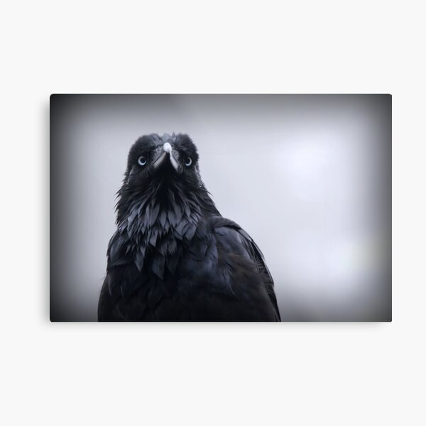 Crow protector Metal Print