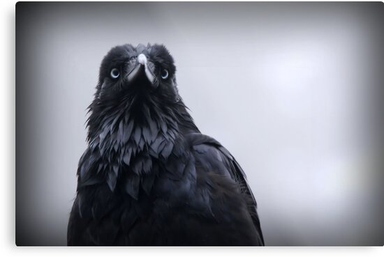 Crow protector by Robyn Lakeman