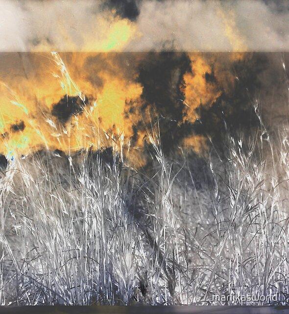 Themeda triandra grass  by marijkasworld