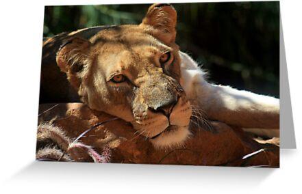 Lioness by Sara Lamond
