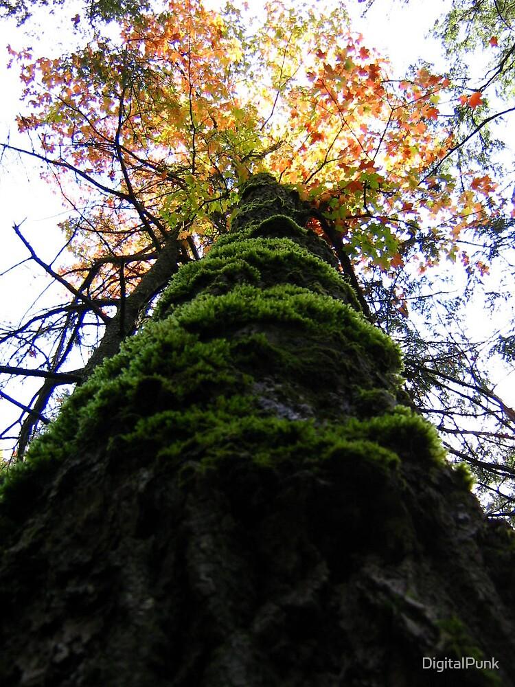 Mossy Tree by DigitalPunk