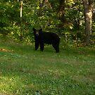 Black bear by bridgie99
