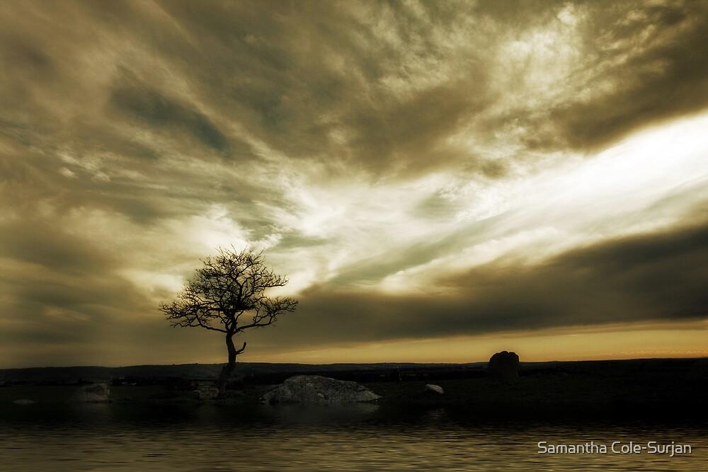 Tree Solitude by Samantha Cole-Surjan