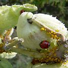 Ladybug by bridgie99