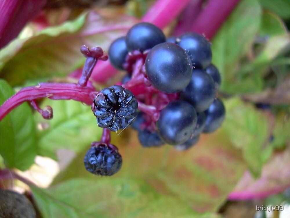 Berries by bridgie99