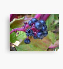 Berries Canvas Print