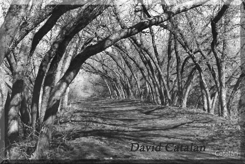 Dharma Path by Catalan