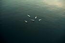 Schwimmendes Stillleben von josemanuelerre