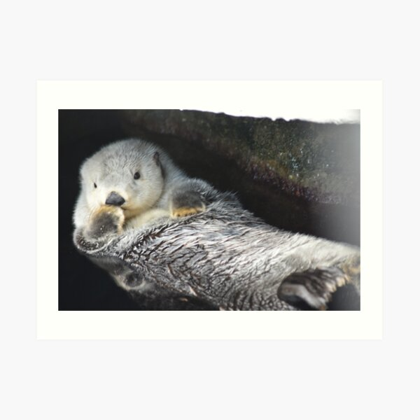 Kisses from an otter Art Print