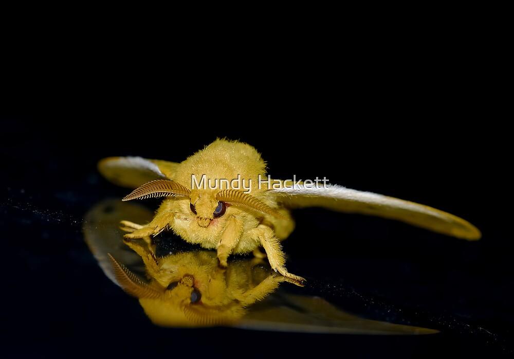 Io moth by Mundy Hackett