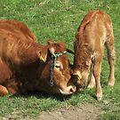 Mum, I love you! by Hans Bax