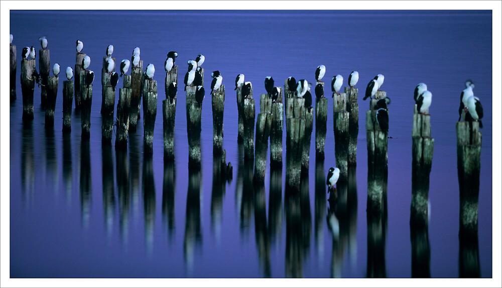 Sleepy Birds by Charlie  Lin