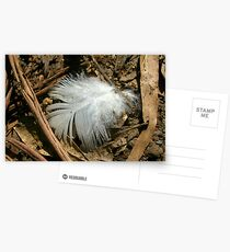 Feather Postcards
