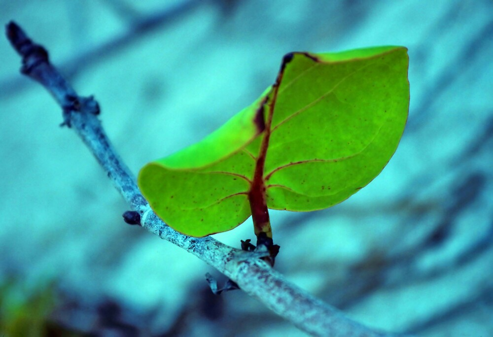 Leaf by Jonathan Cohen
