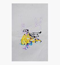 dog and bananas Photographic Print