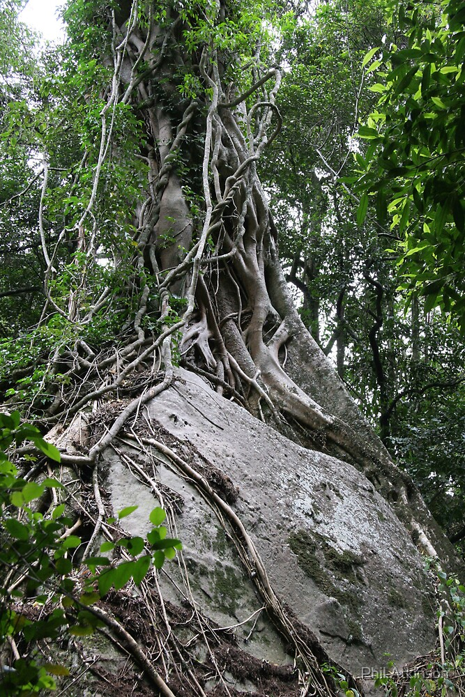 Tree by Phil Atkinson
