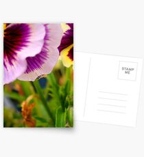 Pansy with Spider Postcards