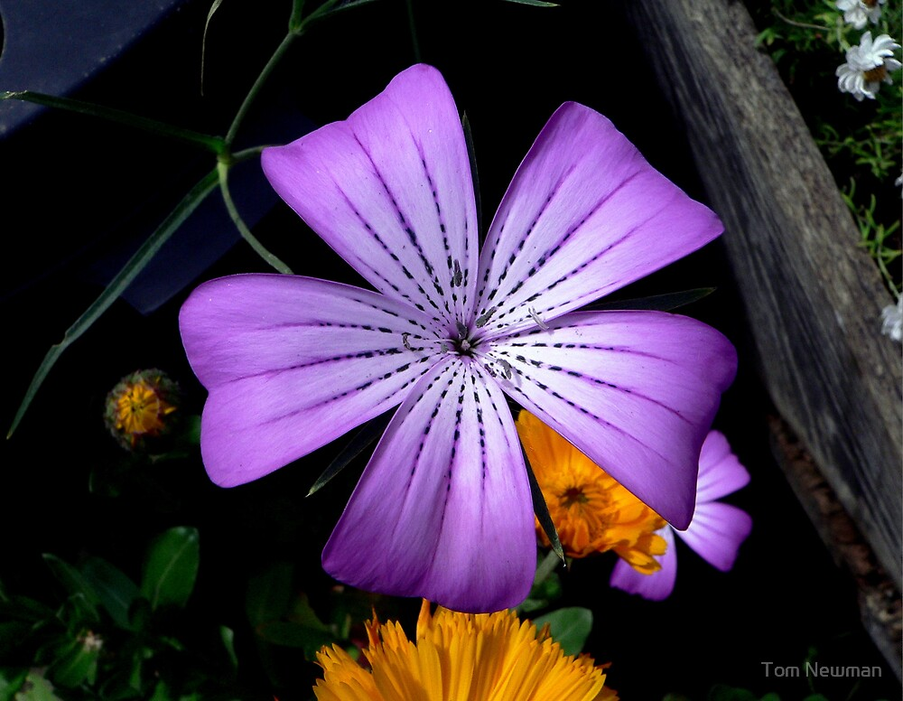 Purple Flower by Tom Newman