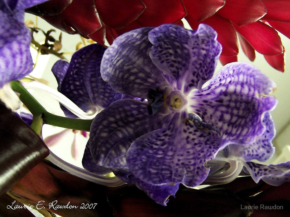 Orchids by Laurie Rawdon