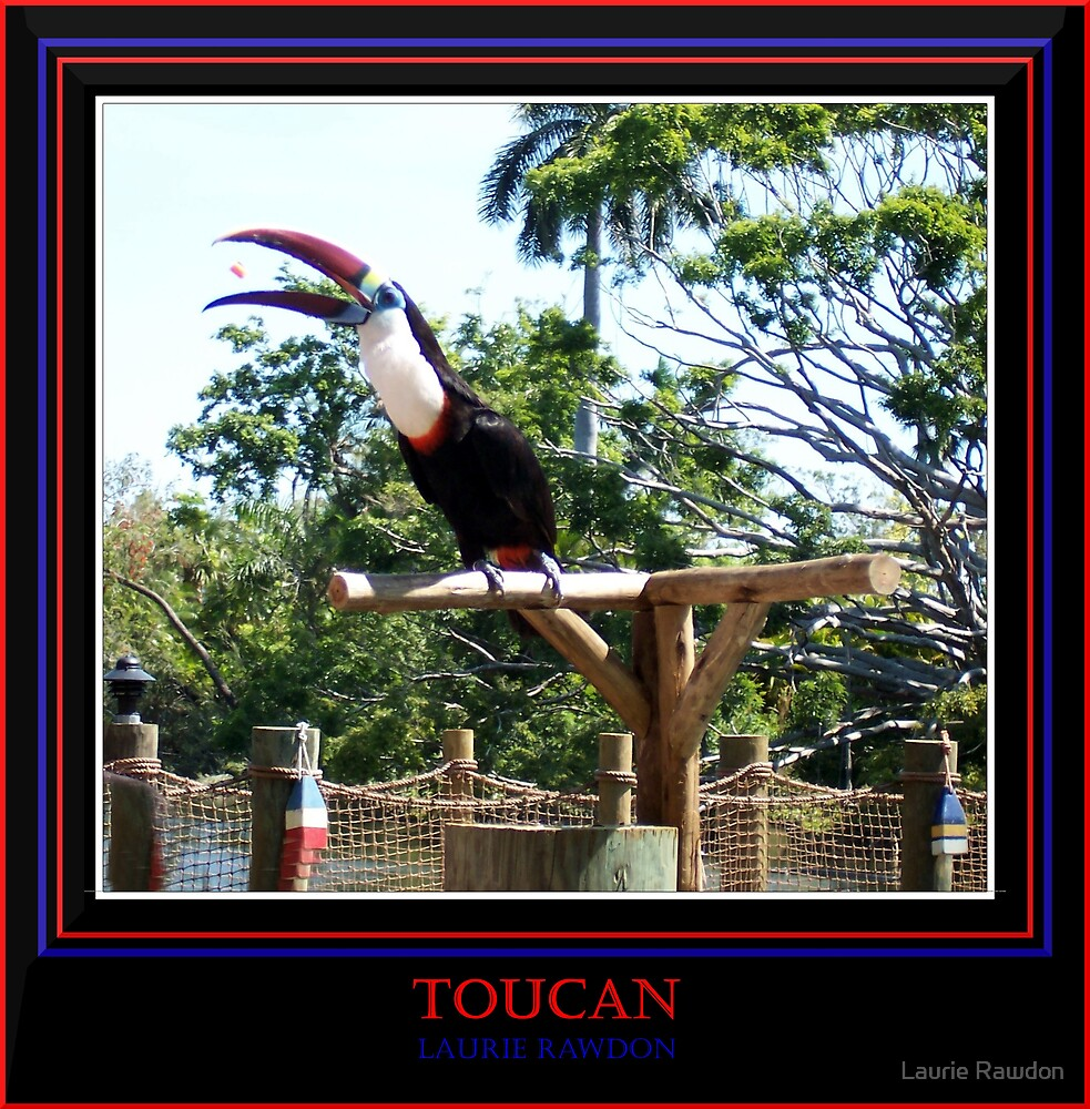 Toucan by Laurie Rawdon