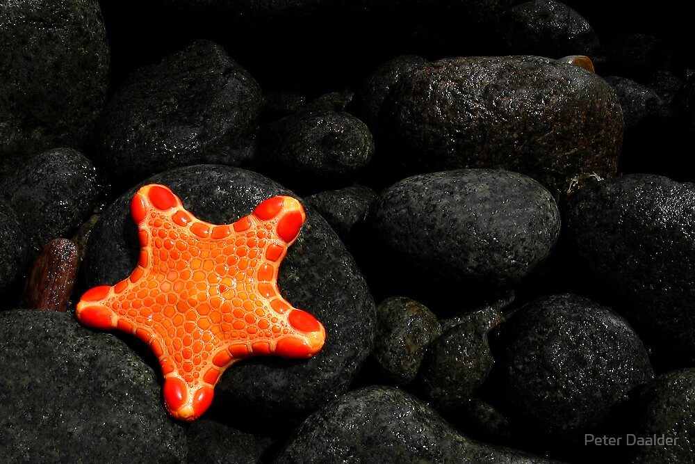 Star of the Sea by Peter Daalder