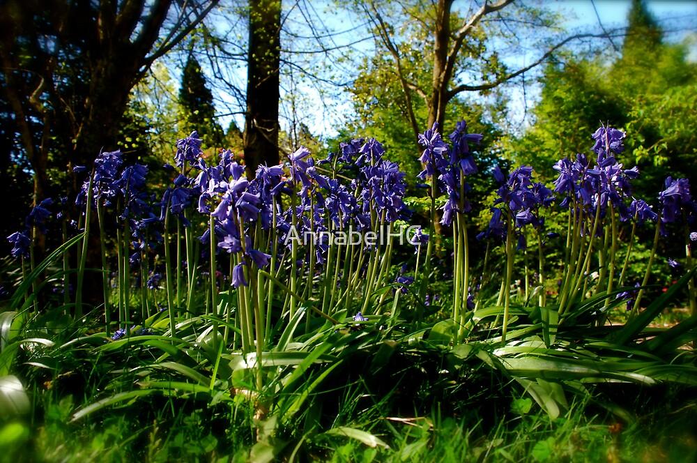 Blue.. by AnnabelHC