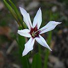 Flower by Dannii Cockerell