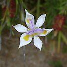 Flower 2 by Dannii Cockerell