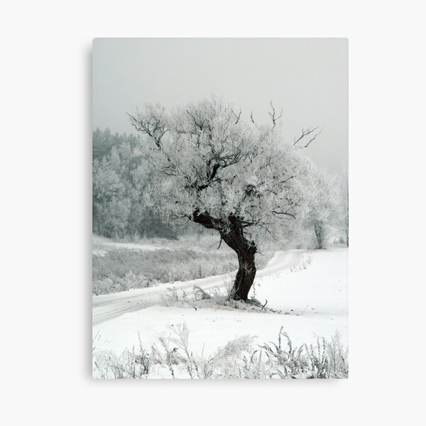 One day Canvas Print