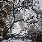 The Tree by Corri Gryting Gutzman