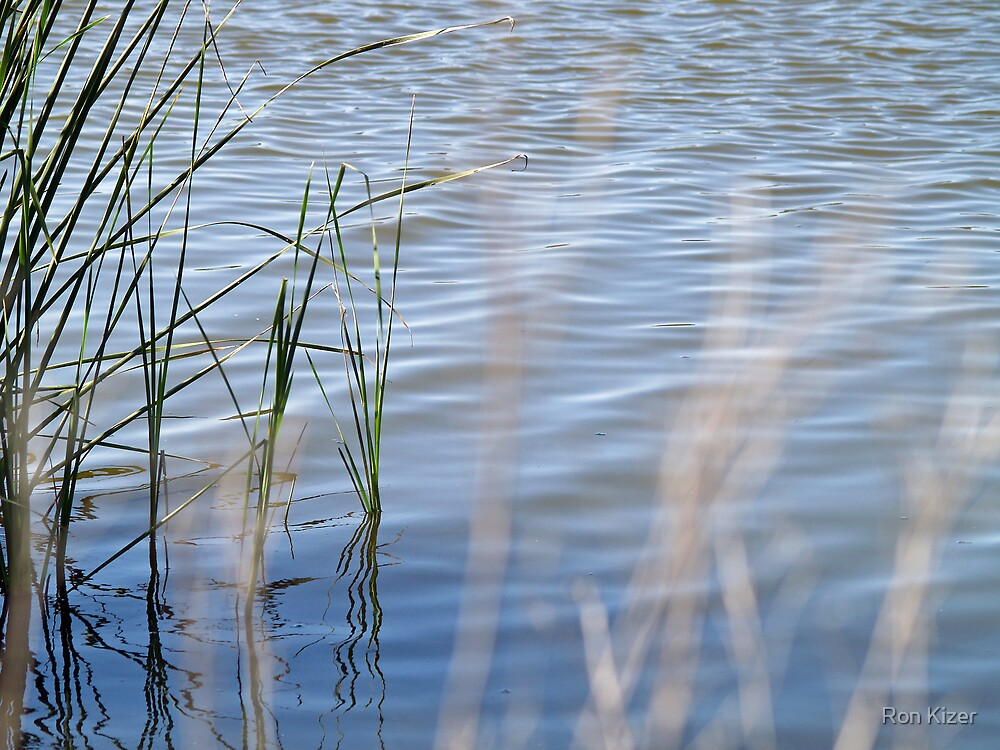 Quiet Ripples by Ron Kizer