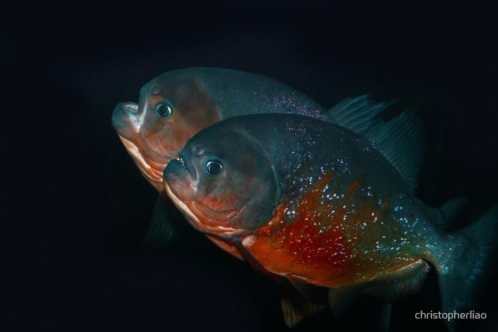 Piranha Brothers by christopherliao