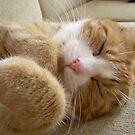 Ginger cat by alnina
