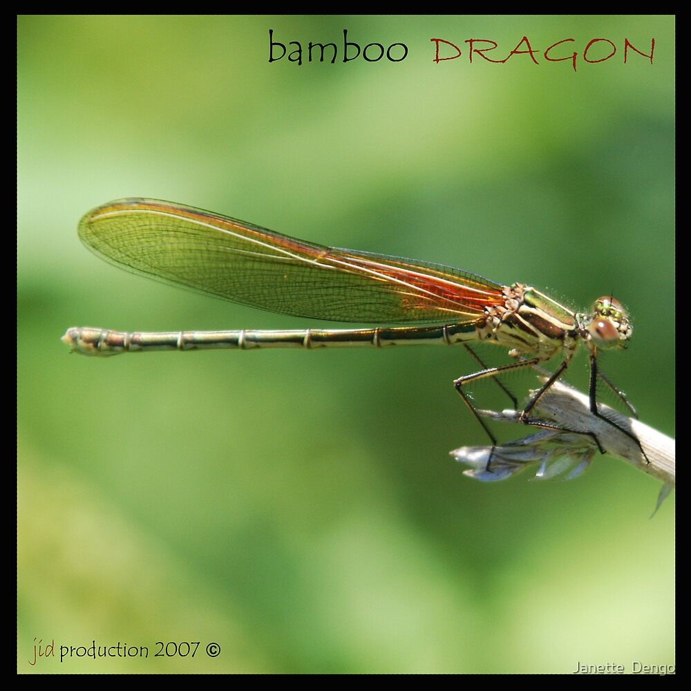 BAMBOO DRAGON by Janette  Dengo