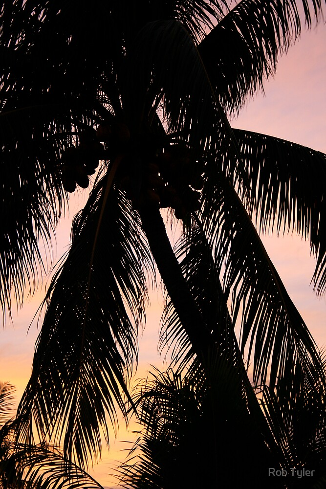 Palm Leaves by Rob Tyler