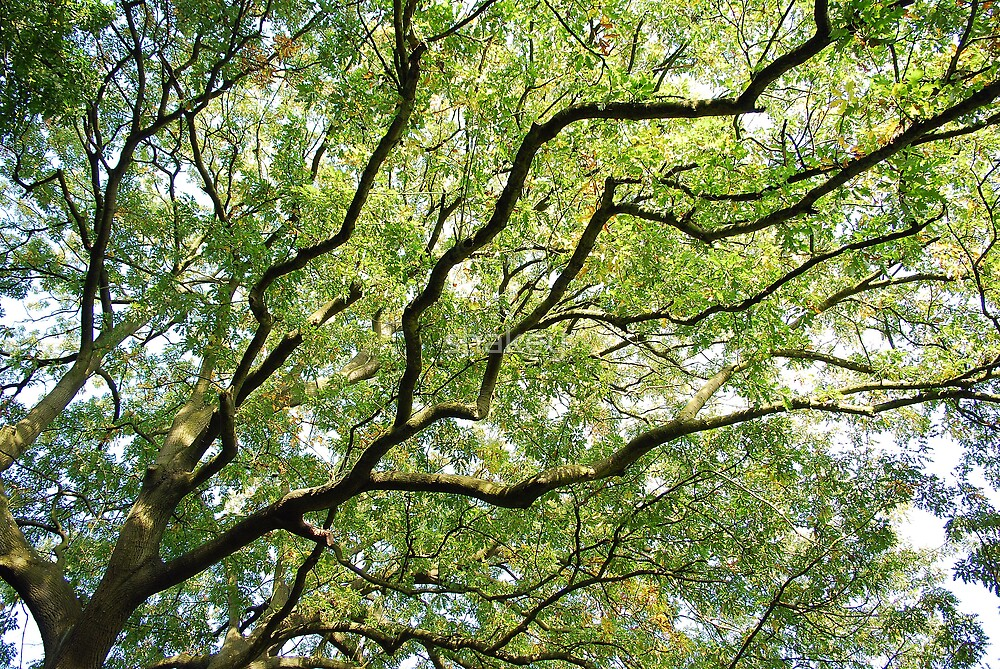 Branching out by shakey