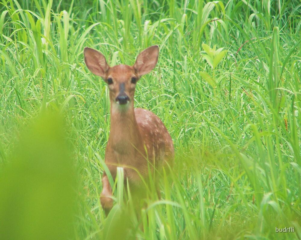 little deer by budrfli