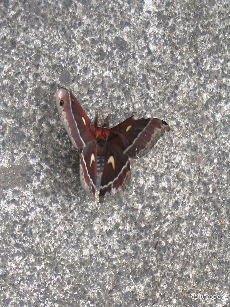 Butterfly Wings by dawnroper