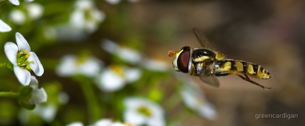 Hovering Hover Fly by greencardigan