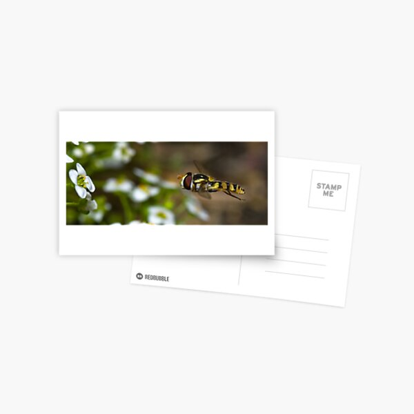 Hovering Hover Fly Postcard