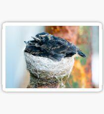 Baby Birds in Nest Sticker