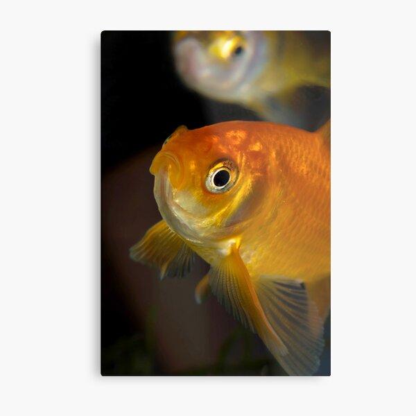 Gary the Goldfish Metal Print