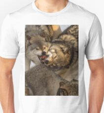 Gray Wolves in a Scuffle T-Shirt