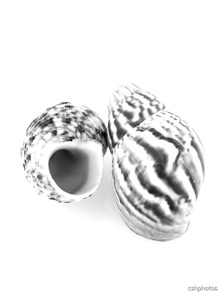 Shells by cshphotos
