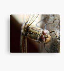 dragonfly1 Canvas Print