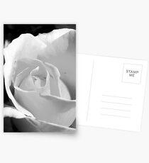 Black & White Rose Postcards