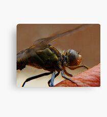 dragonfly4 Canvas Print